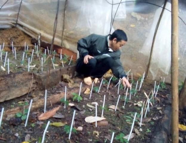Triển vọng cây dược liệu ở Tênh Phông