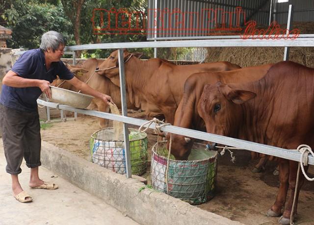 Phát triển chăn nuôi gắn với bảo vệ môi trường
