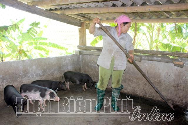 Chăn nuôi an toàn sinh học phòng dịch bệnh