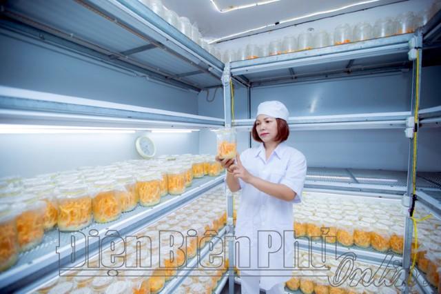 Ứng dụng khoa học công nghệ nuôi trồng nấm Đông trùng hạ thảo